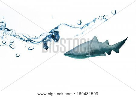 Close up on blue sparkling water against shark swimming in fish tank