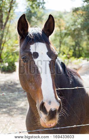A Pair of horses near Carmel Valley California.