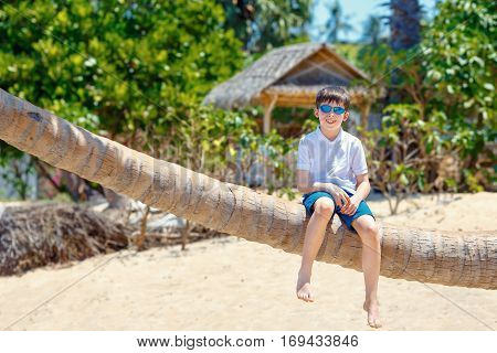 Cute little boy at tropical beach sitting on palm tree during summer vacation