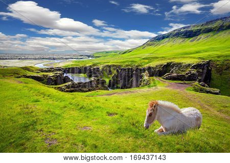 White thoroughbred horse rested on a cliff. The striking canyon in Iceland. The Icelandic Tundra in July. Bizarre shape of cliffs surround the stream with glacial water