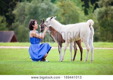 Young attractive woman feeding two baby lamas outdoors