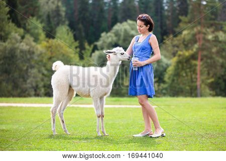 Young attractive woman feeding baby lama outdoors