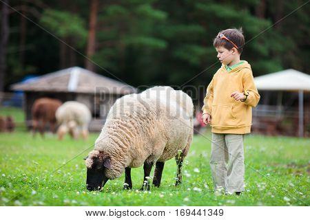 Cute little boy with a sheep on farm