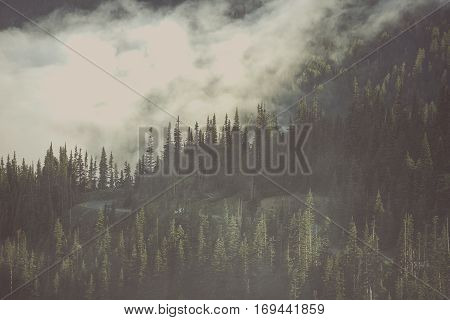 Foggy Wilderness Forest. American North West Olympic Peninsula Mountains Covered By Clouds. Washington State United States of America.