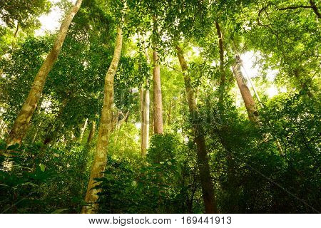Jungle forest with tropical tree at the Khao Phra Thaeo Phuket Thailand