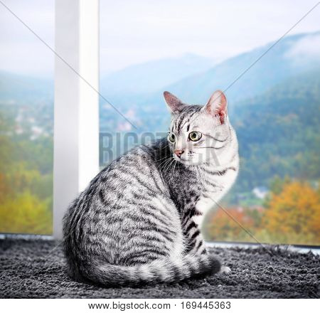 Cute cat on floor near window