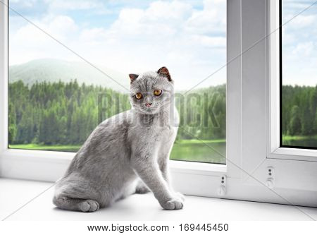 Cute cat on windowsill and beautiful view through window