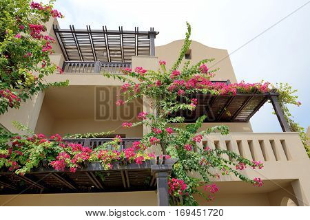 The arabic style villas in luxury hotel with Bougainvillea flowers Fujairah UAE