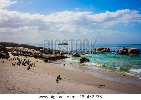 Boulders Penguin Colony in the Table Mountain National Park, South Africa. African black-white penguins. The concept of active and ecotourism