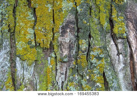 close up of green moss growing on tree trunk