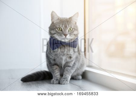 Cute funny cat sitting on window sill at home