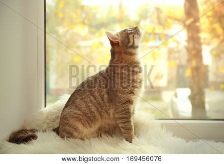 Cute cat on windowsill