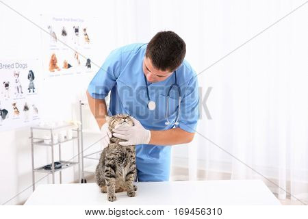 Handsome young veterinarian examining cat in clinic