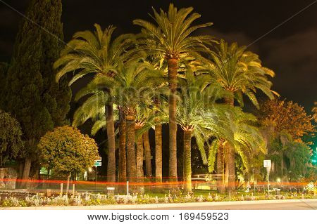 Night view Palm trees in Nice. Cote d'Azur. Mediterranean resort. France.