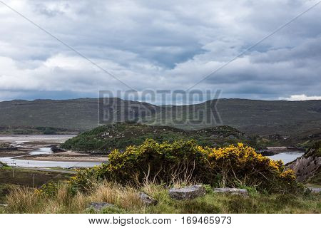 Northwest Coast Scotland - June 6 2012: Scourie Bay at low tide is seen from up a hill. Water meanders between sandbanks and rocky hills. Bluish cloudscape. Yellow broom flowers and green grass.