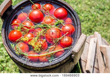 Pickled tomatoes with herbs in the wooden cask.