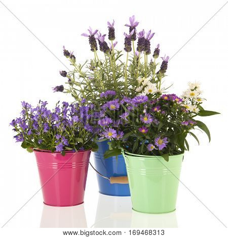 Garden flowers in colorful flower pots isolated over white background