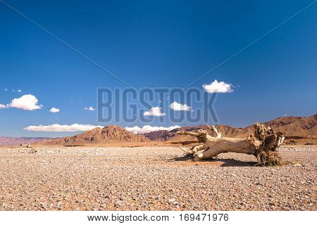 A stub or dead tree lying in a very dry stone desert in Morocco.