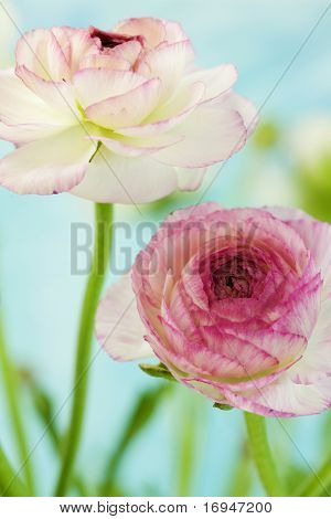 soft floral shot with shallow depth of field