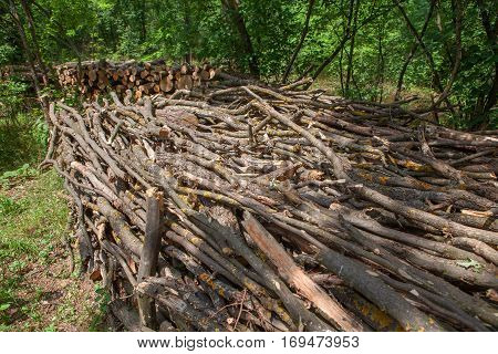 pile of twigs is stocked in the forest