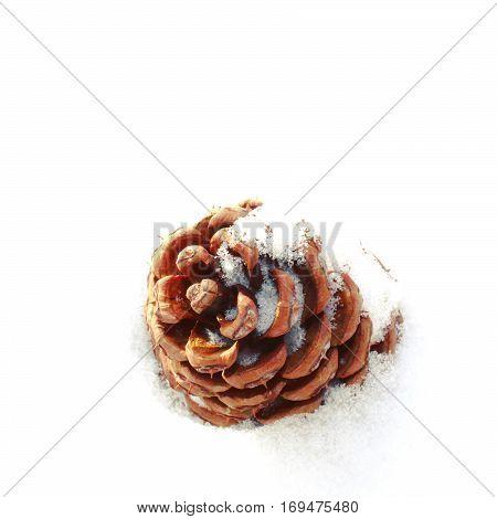Macro view of acorn in snow. Snow covered acorn in fresh white snow.