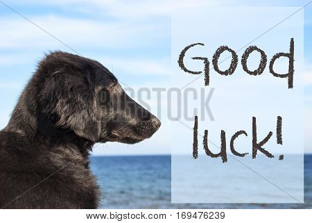English Text Good Luck. Flat Coated Retriever Dog Infront Of Ocean. Water In The Background
