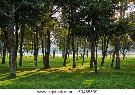 Trees In Simon Bolivar Park