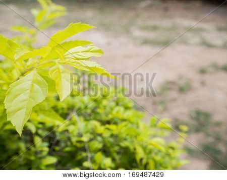 Trendy color of 2017 for concept and occasional is greenery color
