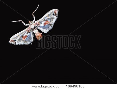 Colorful Moth isolated on black Background - Mariposa colorida
