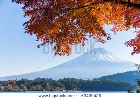 Red Maple tree and Mt. Fuji