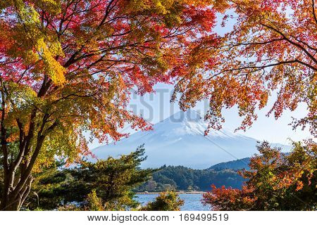Fuji and Red Maple
