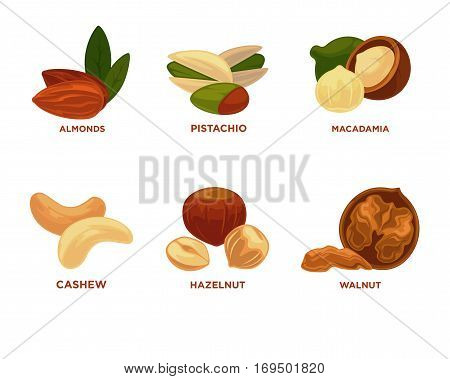 Nut set. Ripe nuts and seeds vector illustration. Various nuts. Highly detailed nut icons nutmeg, almond peanut, pestachio, walnut, hazelnut, cashew, brazil nut, pecan. Vector Illustration.