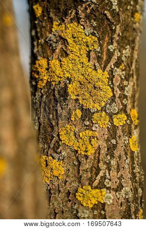 several yellow timber fungi on some tree in the forest