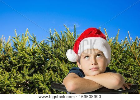 Very handsome boy in a red cap of Santa Claus smiling. Background - green hedge firs