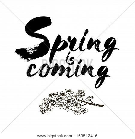 Spring is coming vector lettering on a branch of bird cherry blossoms. Hand drawn phrase. Handwritten modern brush calligraphy for invitation and greeting card t-shirt prints and posters. Elements for your design. White background.