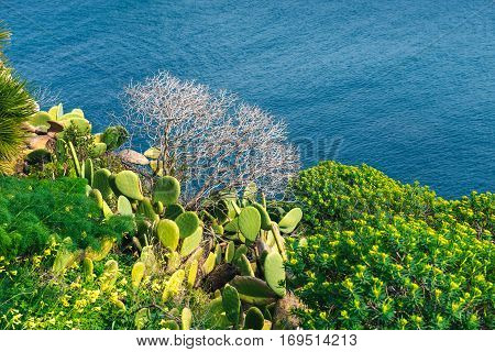 Thorny cactus near the sea, beautiful scenery and calm waters on