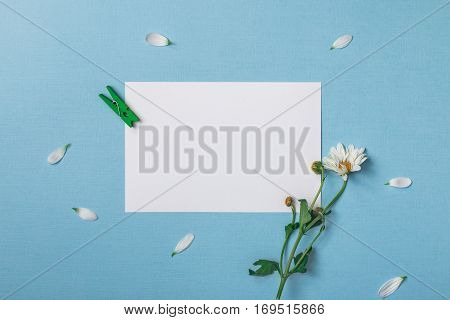 Spring top view composition: blank stationary template / invitation mockup scattered petals around white flower with green stem clothespin. Sky blue background with copy space for text. Flat lay.