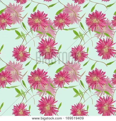 Aster Michaelmas daisy. Colorful texture of pressed dry flowers. Seamless pattern for continuous replicate. Beautiful photo collage.