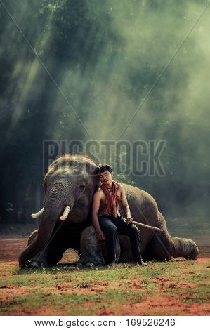 handsome man is sleeping on big elephant's knee with stunning ray of sunlight