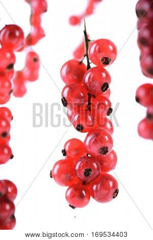 Studio shot of redcurrants on white background