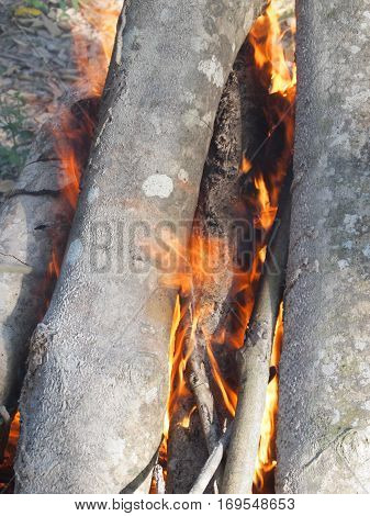 Bonfires of rubber wood. This is the traditional way to dispose of wood although this will pollute the environment if done on a large scale.