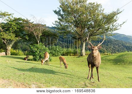 Buck Deer at mount wakakusa
