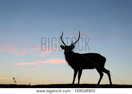 Silhouette of stag deer