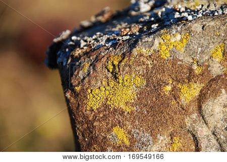 Various kinds of lichen gathered on the ancient stone, close up