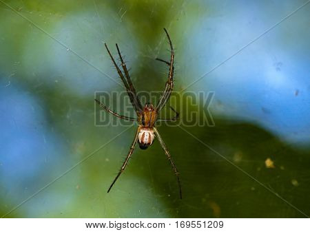 A spider at the center of a full web