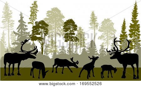 illustration with deers in green forest