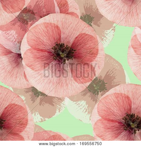 Poppy. Colorful texture of pressed dry flowers. Seamless pattern for continuous replicate. Beautiful photo collage.