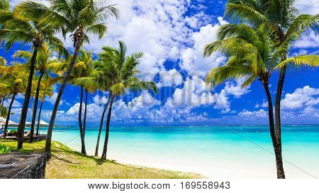 Tropical scenery. Beautiful palm beach with turquoise waters, Mauritius island