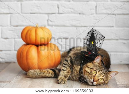 Cute tabby cat with witch hat and pumpkins near brick wall. Halloween concept