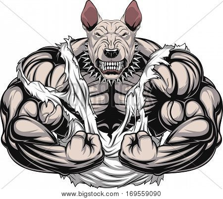 Vector illustration of a strong bullterrier with big biceps bodybuilder
